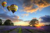 Fototapety Hot air balloons flying over lavender landscape sunset