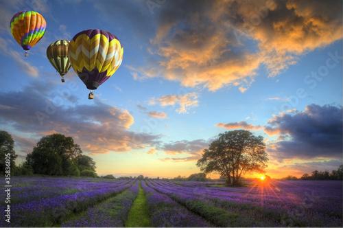 Fototapeta Hot air balloons flying over lavender landscape sunset