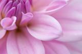 Fototapete Blumenblatt - Blumenstrauss - Blume