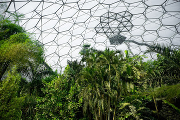 tropical rainforest vegetation inside a manmade bio-dome