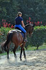 cavallo al trotto