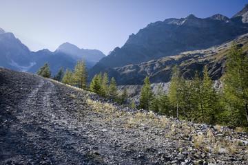 bosco ai margini di una pista sterrata