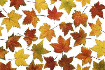 Backround pattern of autumn leaves