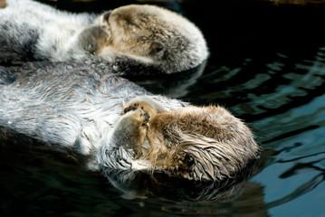 duas pequenas lontras