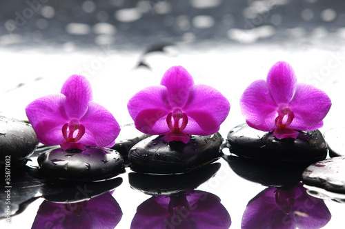 Three zen stones and three orchids with reflection