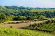 Panorama ulivi