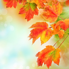 Colorful fall leaves background. Shallow focus.