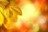 Fall. Autumn