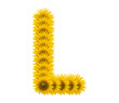 alphabet L, sunflower isolated on white background