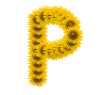 alphabet P, sunflower isolated on white background