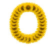 alphabet O, sunflower isolated on white background