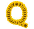 alphabet Q, sunflower isolated on white background