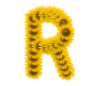 alphabet R, sunflower isolated on white background