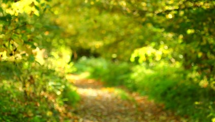 The autumn forest alley bokeh video