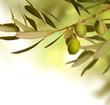 Olive border design
