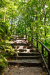 Wood and Dirt Stairs in a Tropical Jungle