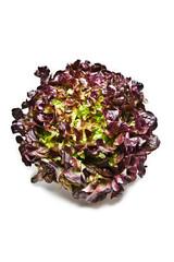 frischer rucola salatkopf