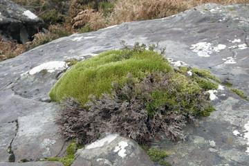 moss on a stone near Stac Pollaidh