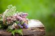 mazzetto di fiori selvatici di montagna