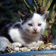 Katze_116559