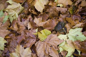 Fall at Hyde Park