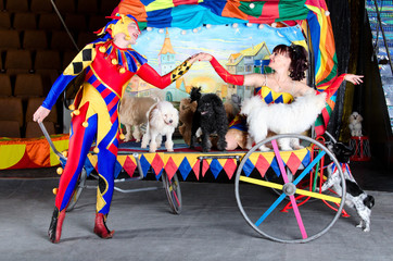 Couple clowns. Romantic relations. Dogs. Circus