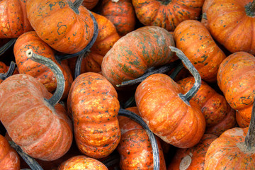 Fall Pumpkin Gourds