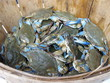 Maryland blue crabs at the market - 35931492