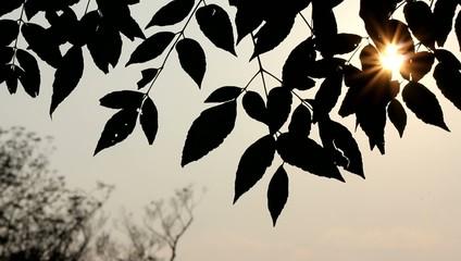 樹木と夕焼け
