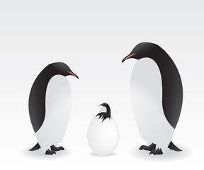 Penguins and baby penguin