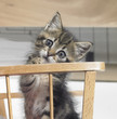 kitten in a wooden crib