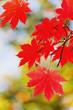 coquettish sudden onset of autumn