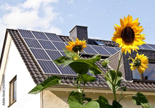 Solarzellen auf Hausdach hinter Sonnenblumen