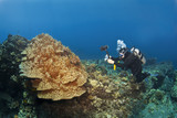 Scuba Diver photographing Mushroom Coral in Hawaii
