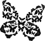 black complicated butterfly on white poster