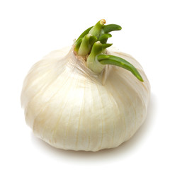 Single white onion isolated