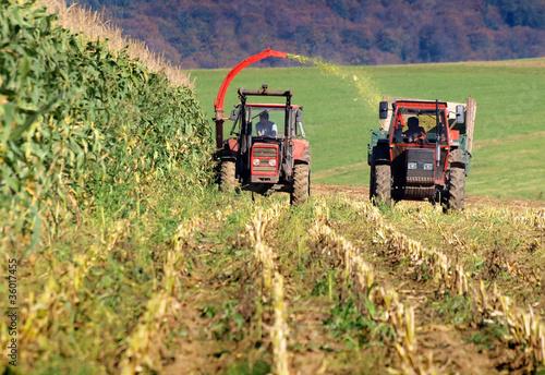 Fototapeten,mais,ernte,cornfield,ernten