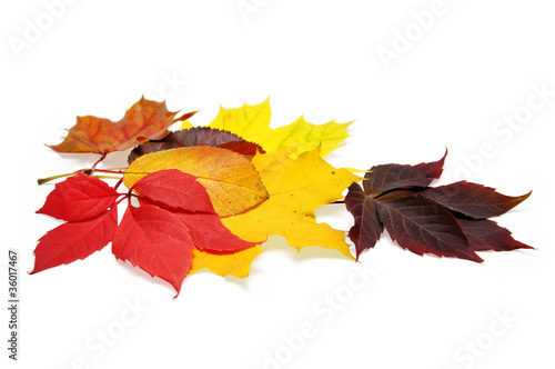colorful autumn leave