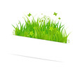 Paper Sticky With Grass