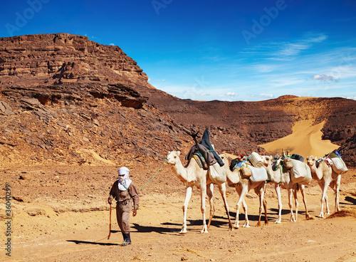 Staande foto Algerije Camels caravan in Sahara Desert, Algeria