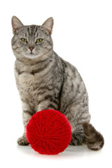 Cat with red skein of yarn
