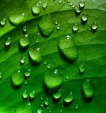 Fototapete Details - Tau - Pflanze