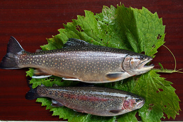 Trouts on the table