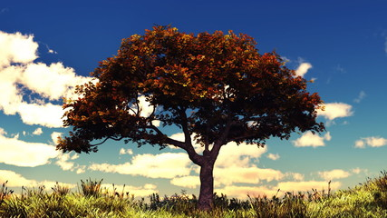Autumn tree on sunny hill.