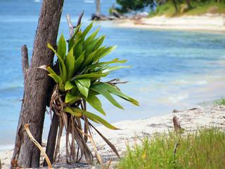 Epithyte on the beach