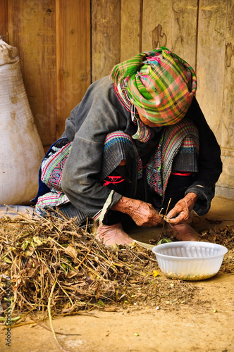 Hmong lady collecting leaves for making wines, Sapa, Vietnam