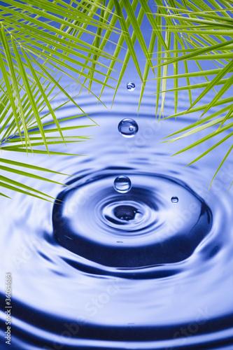 liscie-palmowe-nad-woda