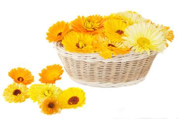 Calendula in a basket