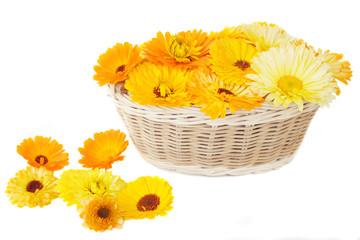 Calendula in a basket