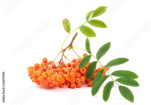 .rowanberry